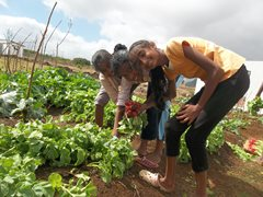 Kinder haben Spaß beim Ernten von frischem Gemüse für das Mittagessen. (Foto: SOS-Archiv)